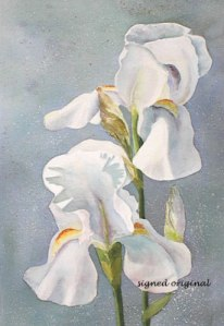 White Iris 15 X 22 watercolor - framed- $350
