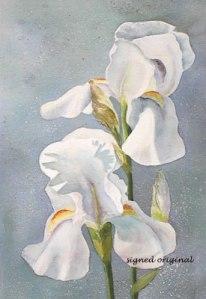 White Iris 15 X 22 watercolor - framed- $350